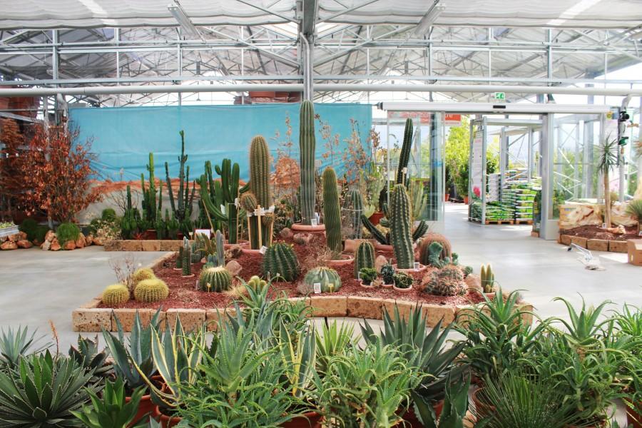 Sg piante grasse top092011 13 show garden arezzo il for Offerte piante da giardino