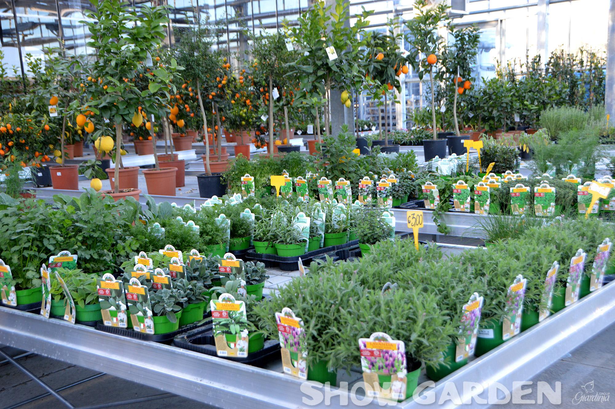 Coltivare In Casa Piante Aromatiche piante aromatiche: indispensabili in cucinama non solo!